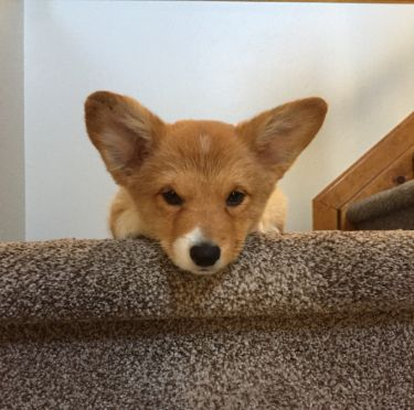 Mike's puppy Rilee on the stairs